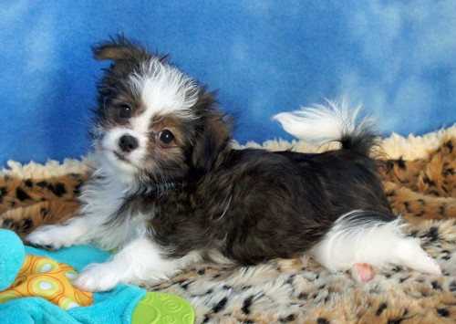 ваш любимый ми-ки собака купить в санкт-петербурге вклады банках Нижневартовска